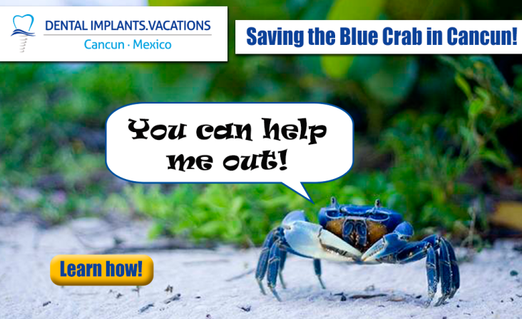Blue crabs (jgorcavallina)