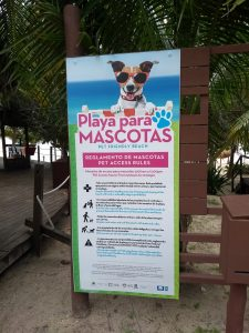 petfriendly beach